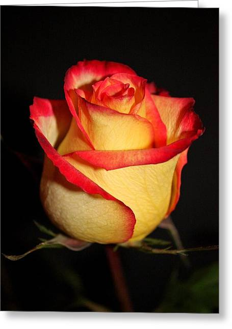Pdx Roses Greeting Cards - Single Rose Greeting Card by Cathie Tyler