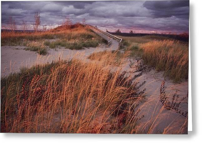 Bear Tracks Greeting Cards - Sleeping Bear Dunes National Lakeshore Greeting Card by Melissa Farlow