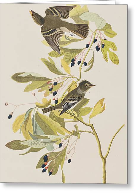 American Food Greeting Cards - Small Green Crested Flycatcher Greeting Card by John James Audubon