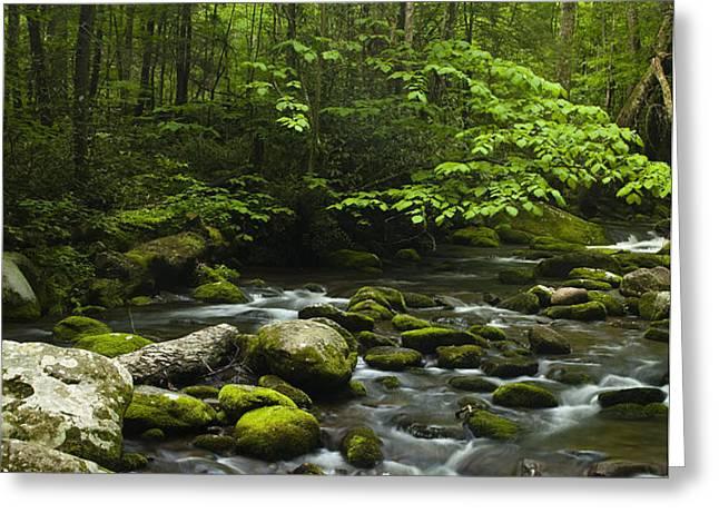Smoky Mountain Stream Greeting Card by Andrew Soundarajan