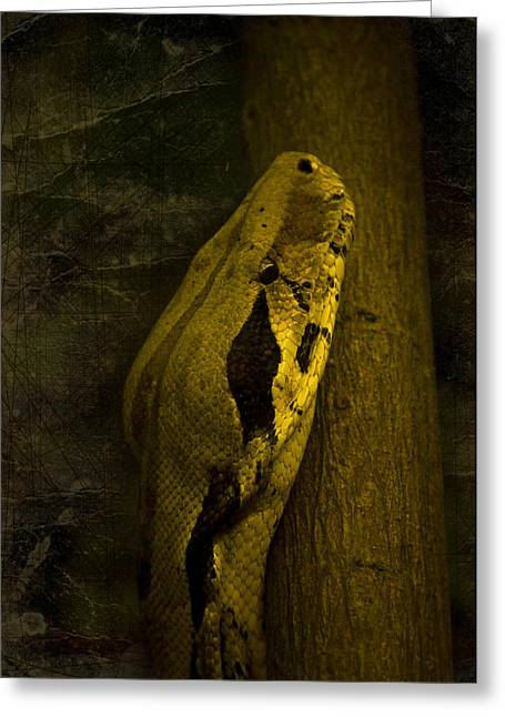Branch Greeting Cards - Snake Greeting Card by Svetlana Sewell