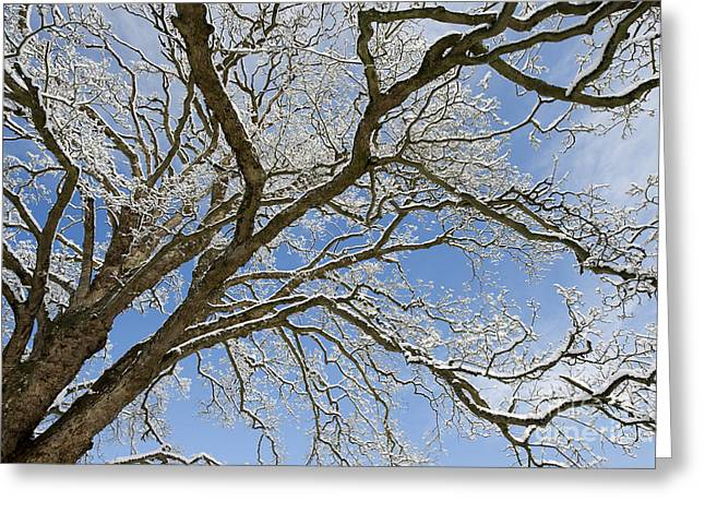 Wintry Photographs Greeting Cards - Winter Branch Greeting Card by Tim Gainey