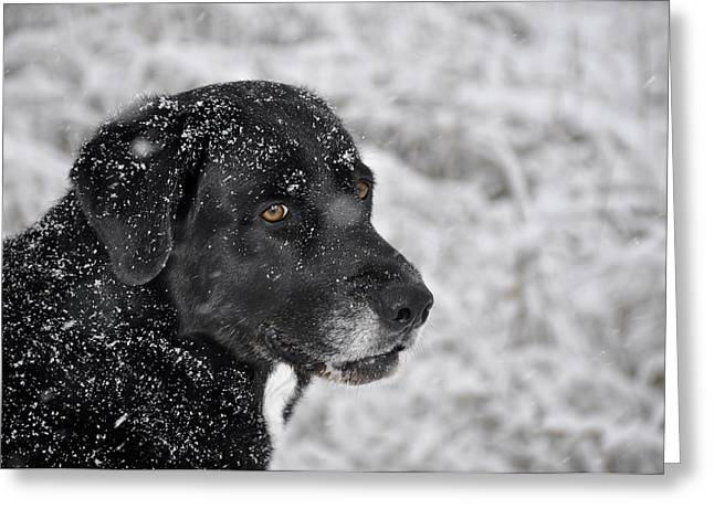 Dog In Snow Greeting Cards - Snow Dog Greeting Card by Justin  Tani