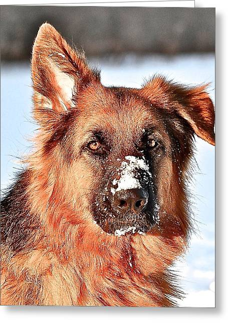 Dogs In Snow. Greeting Cards - Snow Dogs Greeting Card by Danielle Sigmon