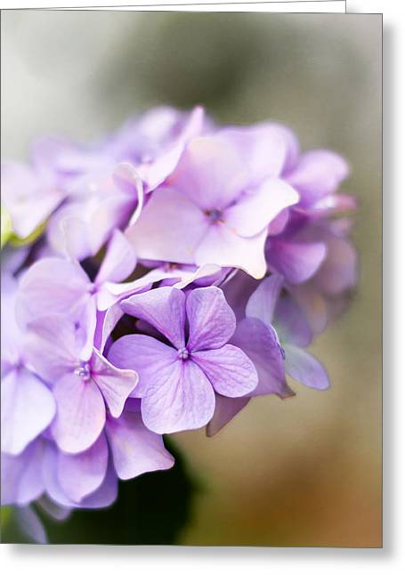 Botanics Greeting Cards - Soft Light Greeting Card by Shelby  Young