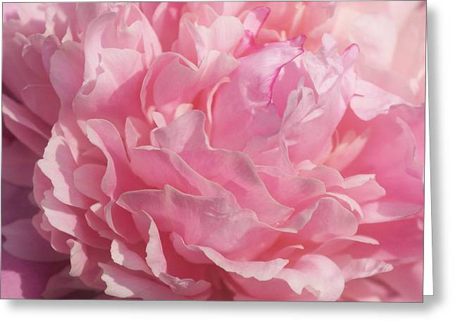 Softly Pink Greeting Card by Sandy Keeton