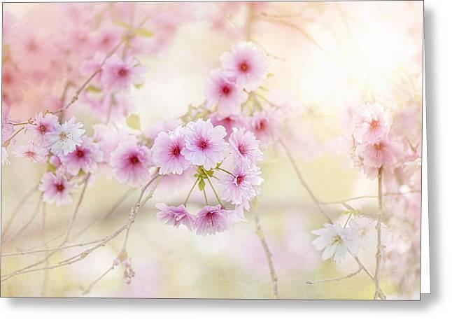 Softness Greeting Card by Jacky Parker