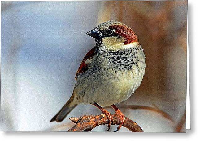 Abstract Digital Pastels Greeting Cards - Sparrow H a Greeting Card by Gert J Rheeders