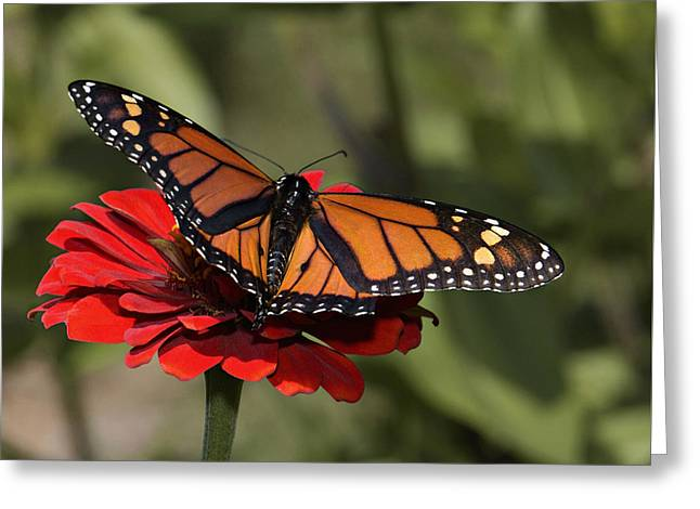 Spread Your Wings Greeting Card by Don Spenner