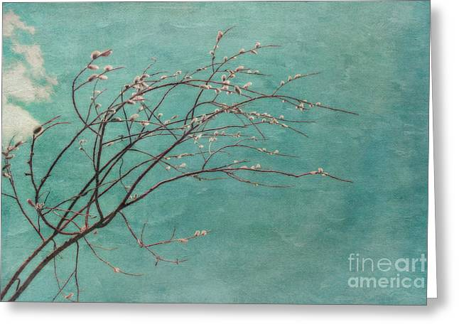 Willows Greeting Cards - Spring Blues Greeting Card by Priska Wettstein