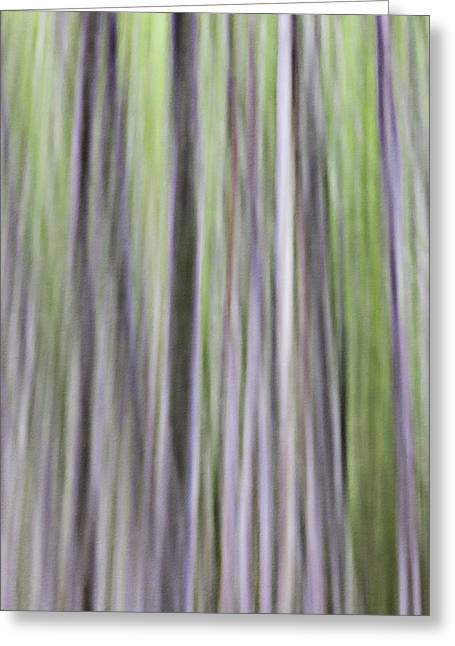Abstract Movement Greeting Cards - Spring Dance Of The Alder-motion Abstract Greeting Card by Ed Book