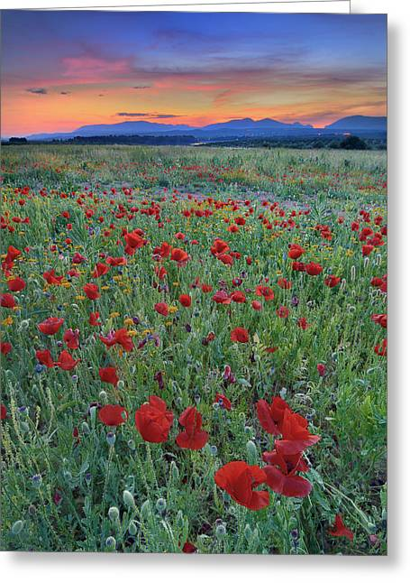 Europe Greeting Cards - Spring poppies at sunset Greeting Card by Guido Montanes Castillo