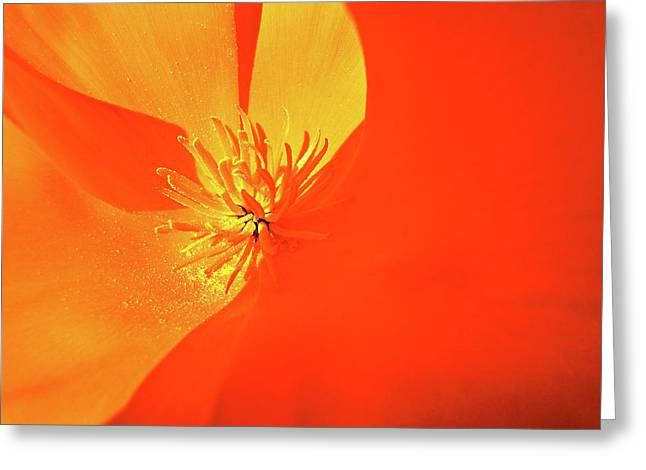 California Orange Poppy. Yellow Poppy Greeting Cards - Spring Poppy Greeting Card by Liz Vernand