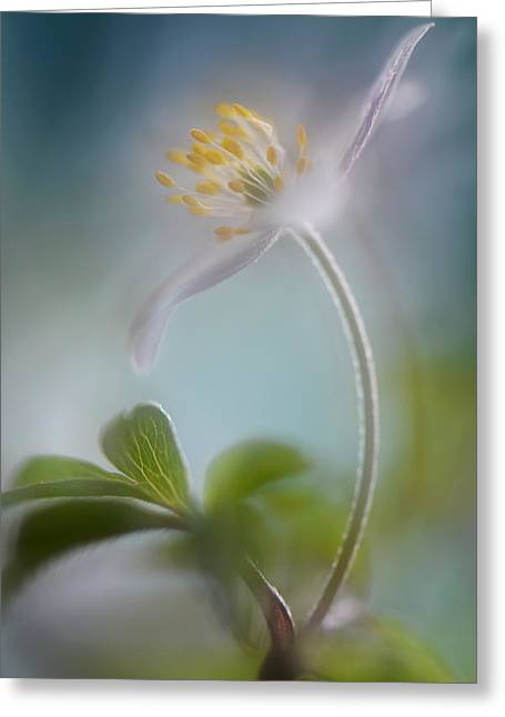 Macro Greeting Cards - Springtime Greeting Card by Heidi Westum