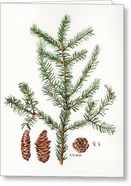 Nature Study Greeting Cards - Spruce Twig Greeting Card by Betsy Gray Bell