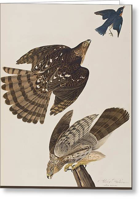 Hawk Bird Greeting Cards - Stanley Hawk Greeting Card by John James Audubon