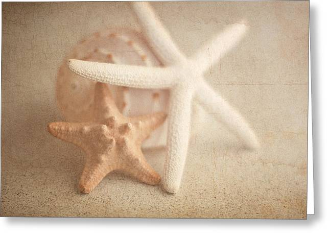 Crustacean Greeting Cards - Starfish Still Life Greeting Card by Tom Mc Nemar