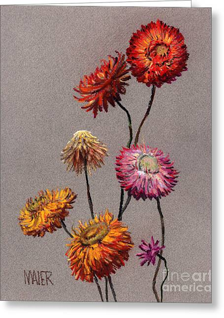 Straw Greeting Cards - Straw Flowers Greeting Card by Donald Maier