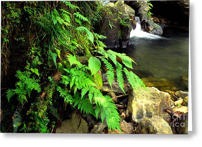 Puerto Rico Greeting Cards - Stream El Yunque National Forest Greeting Card by Thomas R Fletcher