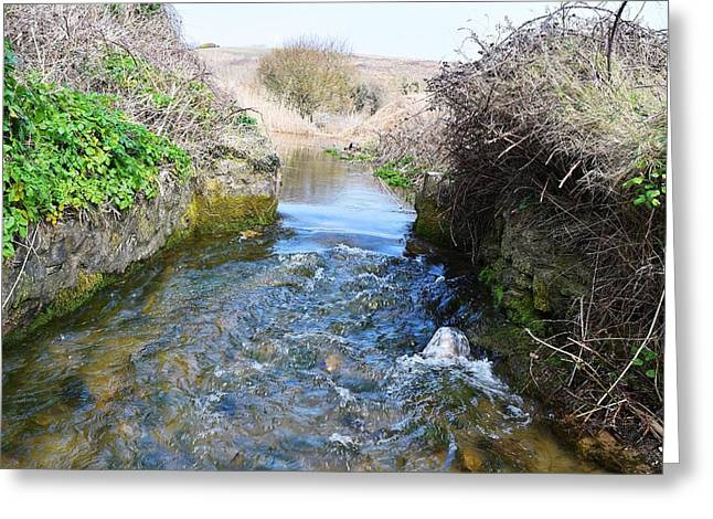 Day Lilly Greeting Cards - Stream to the Sea 3 Greeting Card by David G Bevan