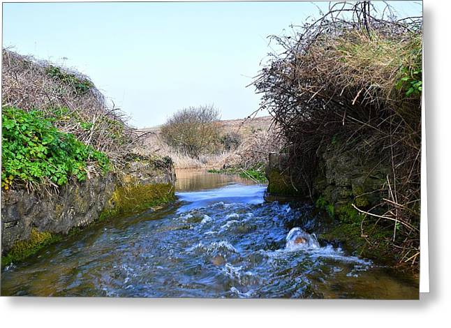 Day Lilly Greeting Cards - Stream to the Sea 4  Greeting Card by David G Bevan