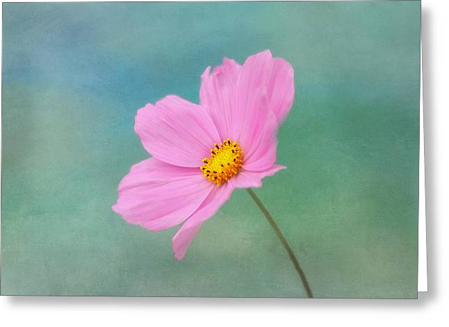 Summer Breeze Greeting Card by Kim Hojnacki