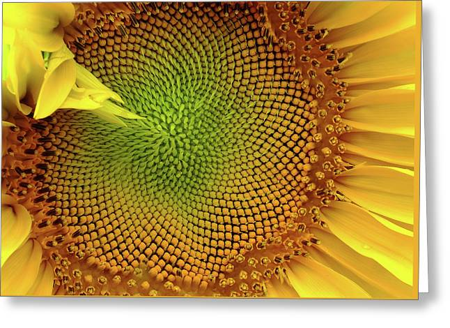 Summer Gold Greeting Card by Bill Morgenstern