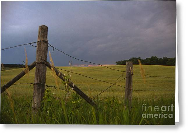 Wheat Field Sunset Print Greeting Cards - Summer Storm in Minnesota Greeting Card by Lowell Anderson