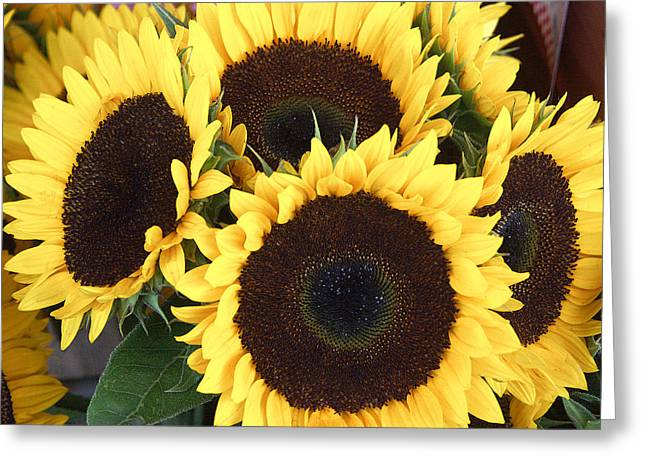 Sunflowers Greeting Card by Tom Romeo