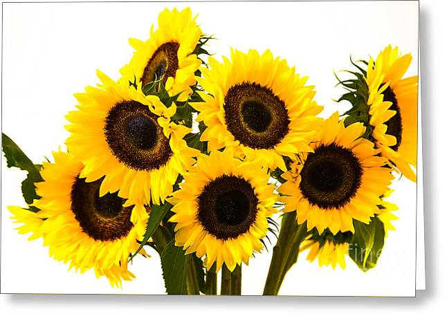 Yellow Sunflower Pyrography Greeting Cards - Sunflowers7 Greeting Card by Olga Photography