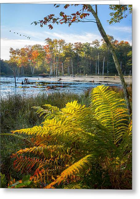 Beaver Greeting Cards - Sunrise in the Swamp Greeting Card by Bill Wakeley