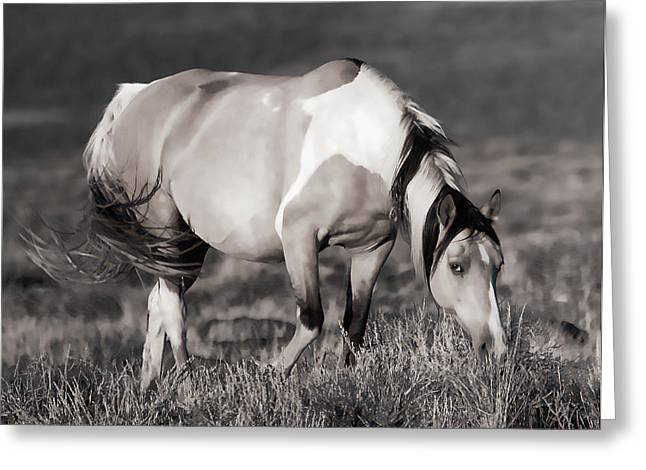 Vale Greeting Cards - Sunset Graze Greeting Card by Athena Mckinzie