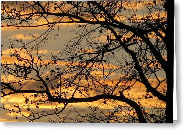 Beautiful Clouds Pyrography Greeting Cards - Sunset Silhouettes Greeting Card by Valia Bradshaw