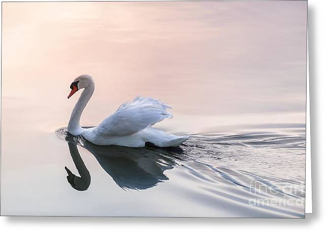 Swans... Greeting Cards - Sunset swan Greeting Card by Elena Elisseeva