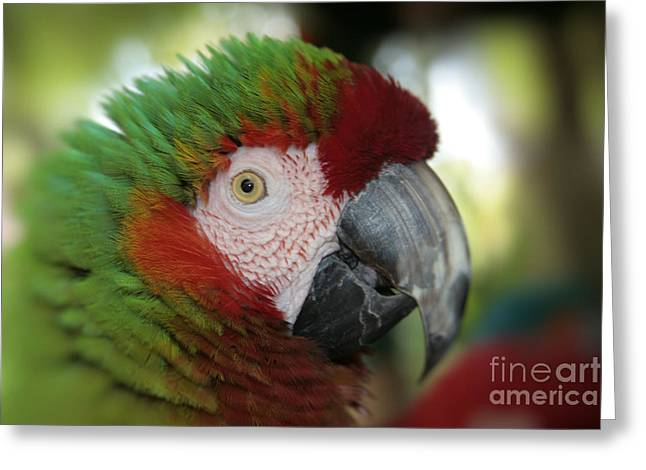 Macaw Art Print Greeting Cards - Surprised by Joy Greeting Card by Sharon Mau