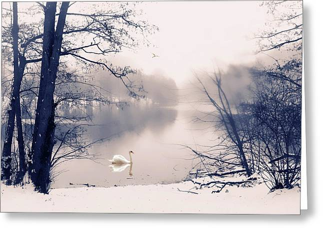 Water Fowl Greeting Cards - Swan Song Greeting Card by Jessica Jenney