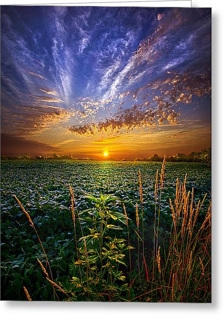 Cropped Greeting Cards - Sweet Surrender Greeting Card by Phil Koch