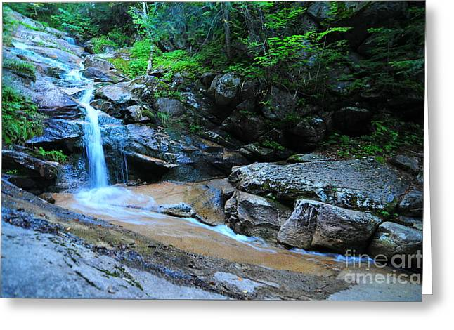 Swiftwater Falls  Greeting Card by Catherine Reusch  Daley