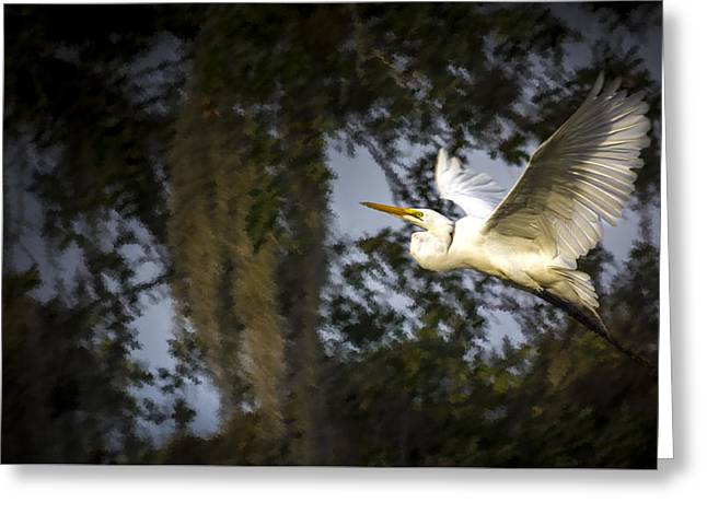 Take Flight Greeting Card by Marvin Spates