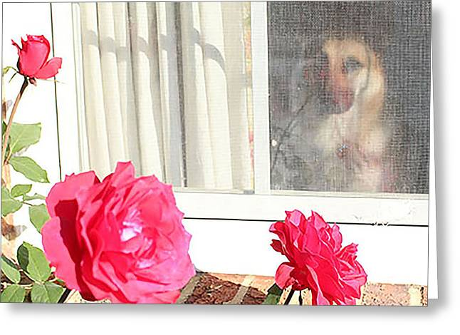 Purchase Greeting Cards - Taras Rosey Window Greeting Card by Linda Ritlinger