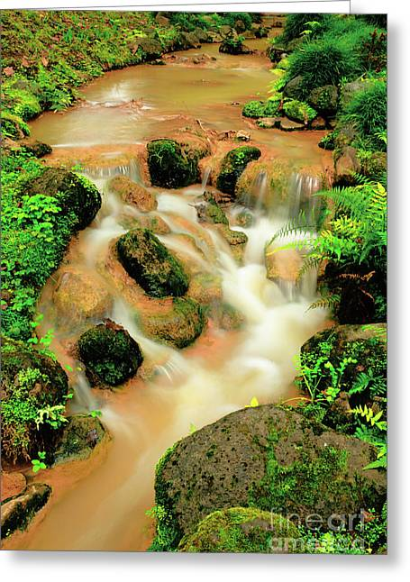 Water Flowing Greeting Cards - Terra Nostra Park Greeting Card by Gaspar Avila