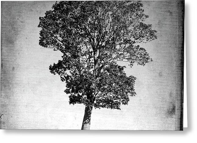 Photographs Digital Art Greeting Cards - Textured tree Greeting Card by Bernard Jaubert