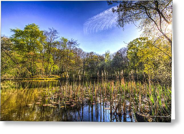 Bulrushes Greeting Cards - The Bulrush Pond Greeting Card by David Pyatt