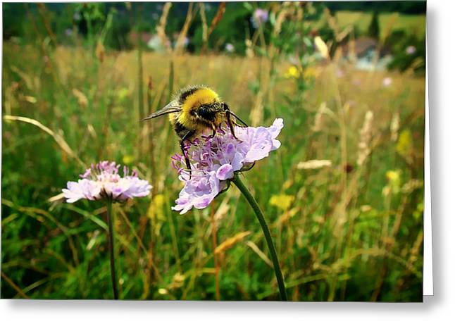 Yellow Jacket Greeting Cards - The Bumblebee  Greeting Card by Suzanne Rowcliffe