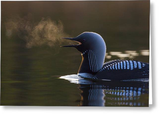 Award Greeting Cards - The Call of The Loon Greeting Card by Tim Grams