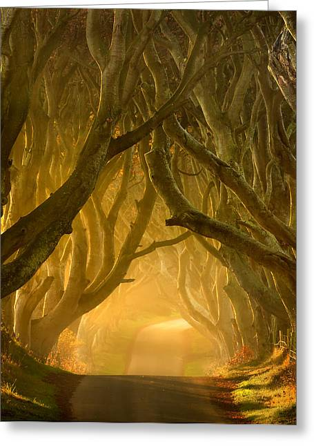 Ballymoney Greeting Cards - The Dark Hedges III Greeting Card by Pawel Klarecki