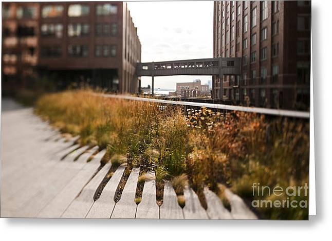 Office Space Greeting Cards - The High Line Park Greeting Card by Eddy Joaquim