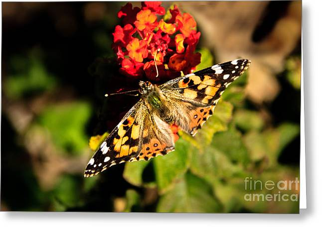 The Painted Lady Greeting Card by Robert Bales