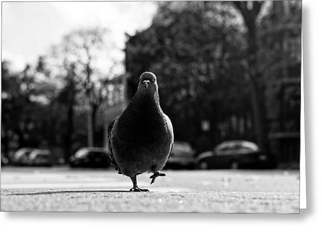 High Stepping Greeting Cards - The Pigeon High Step Greeting Card by Leeroy