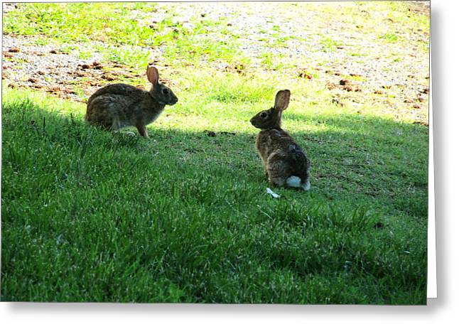 Greeting Cards - The Rabbit Dance Greeting Card by Digital Art Cafe